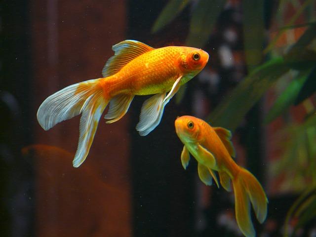 Comment se passe l'entretien d'un aquarium?