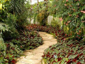 Quelques bonnes pratiques pour avoir un beau jardin