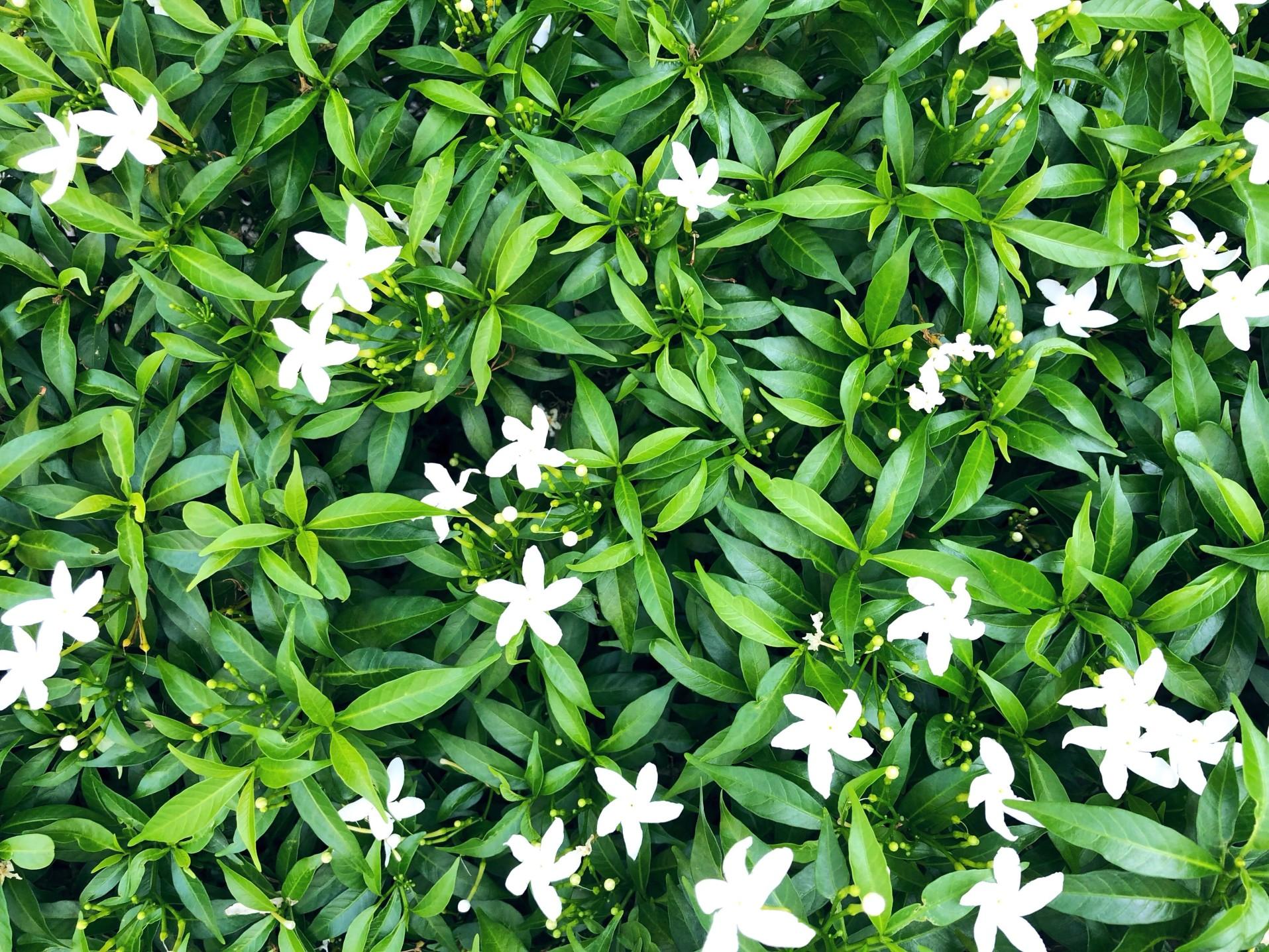 Les fleurs, élément indispensable dans un décoration d'intérieur ou d'extérieur.