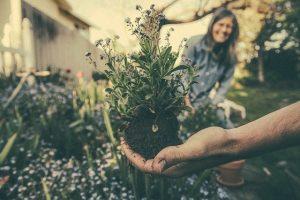 L'entretien de son jardin : Quels arbustes et plantes planter ?