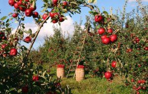 Read more about the article Les enjeux de l'arrosage d'un jardin potager?