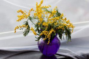 Le mimosa : une plante méditerranéenne facile à cultiver