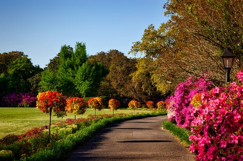 Comment redonner vie à votre jardin?